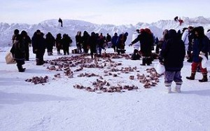 Inuit diet. (image credit)