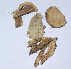 sophora root
